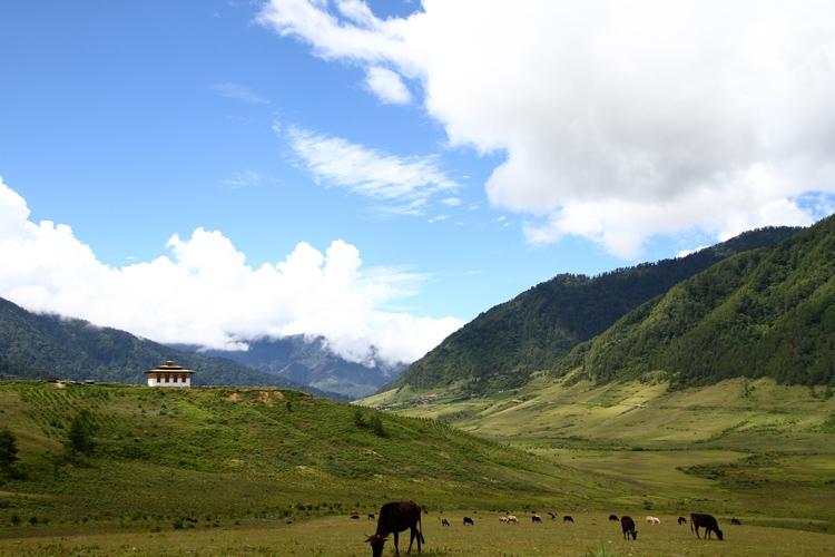 早餐後,我們會送您到達遊覽的起點,去觀看壯觀和著名的Taktsang monastery(老虎的巢穴)。這條去寺院的古道會走過美麗的松樹林,那裡有很多滿佈西班牙苔蘚的樹木和經幡飛舞的小樹林。你可以停留在食堂休息和享用茶點,選擇繼擇休息或繼續前進(如果不累),直至你清楚地看到明明看似觸手可及卻雄偉的Taktsang monastery。此寺院建於十七世紀,令人難以置信的建造於一個龐大岩石懸崖的邊緣掉價900米到下面的山谷的邊緣。傳說於公元八世紀,Rimpoche大師將佛教帶進不丹,騎著母老虎飛行並降落於這裡